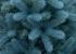 Искусственная елка E-elka Литая Голубая