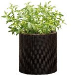 Горшок для цветов Cylinder Planter Small, коричневый