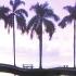 Шторка для ванной текстильная Spirella Palm Beach
