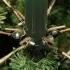 Сосна искусственная Medford зеленая