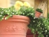 Горшок для цветов  GARDINA 35см