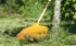 Грабли садовые  овальные
